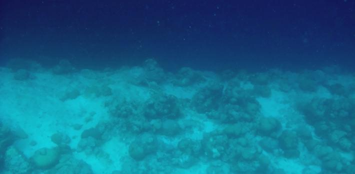 MalediivitB142 copy1