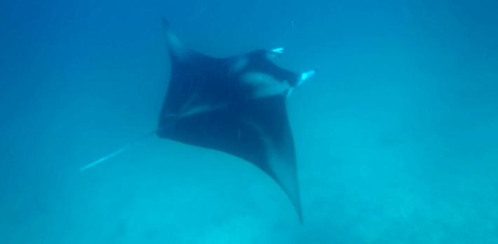 MalediivitB142 copy8