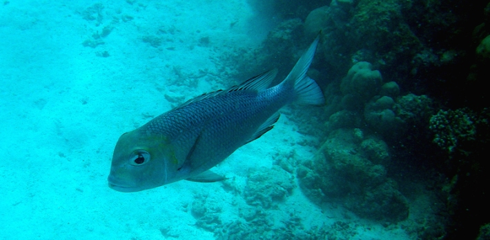 MalediivitB142