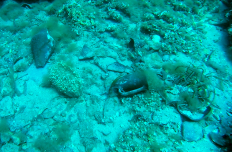 Saw these ancient amforas while diving