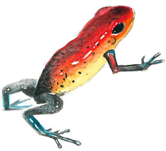 Little_Frog