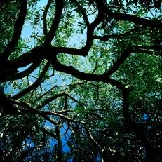 Walked amongst olive trees
