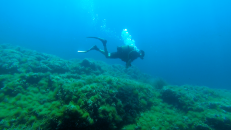 Dived in Greece several times
