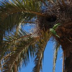 Park Güell / parrots nesting