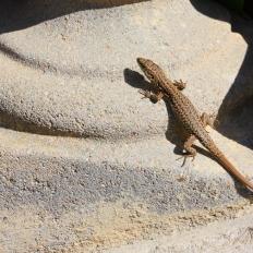 A lizard!