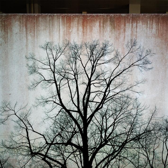 Tree_Wall