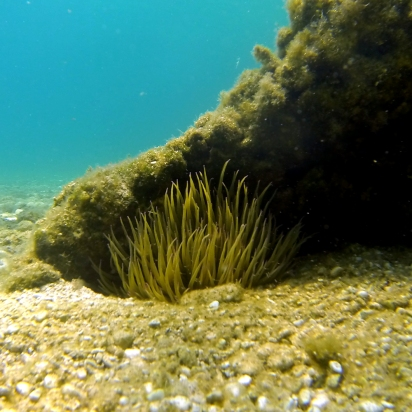 Took this picture while snorkelling in Lefkada, Greece.