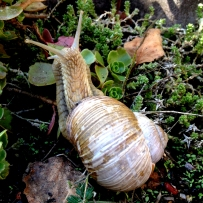 Saw an awesome snail and had to take a picture too. :)