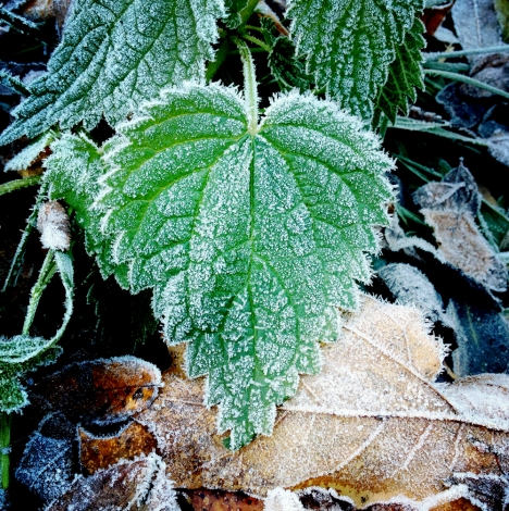 Signs of frost photographed in October.