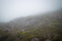 Foggy Mount Wellington.