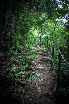 A rainforest trail on Daydream Island