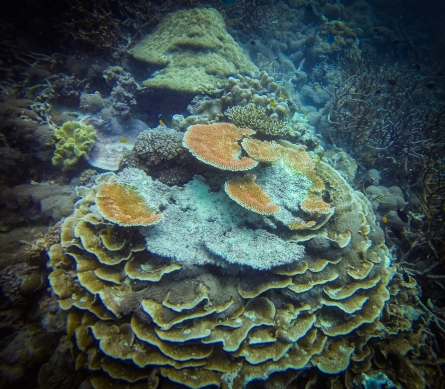 Cool layered coral at Great Barrier Reef