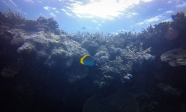 Diving near the edge of the coral reef.