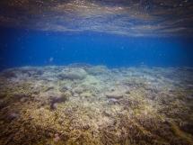 The edge of Hardy Reef