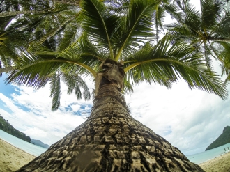 "Palm tree shot ""GoPro style""."