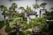 Chinese Garden of Friendship in Sydney.