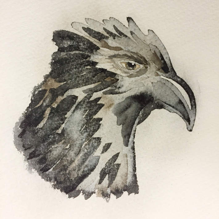eagle_head_progress1